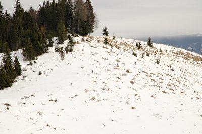 Cupa Călimani la schi de tură